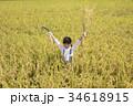 稲刈り 稲穂 田んぼの写真 34618915