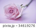 薔薇 バラ 一輪の写真 34619276