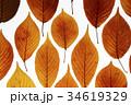 葉 木の葉 枯れ葉の写真 34619329
