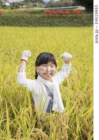 稲刈りをする子供 ガッツポーズ 34619665