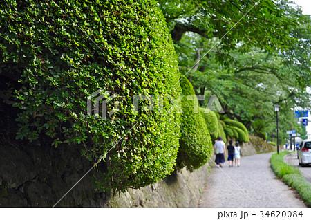 石川県金沢市兼六園の写真 34620084