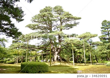 石川県金沢市兼六園の写真 34620091