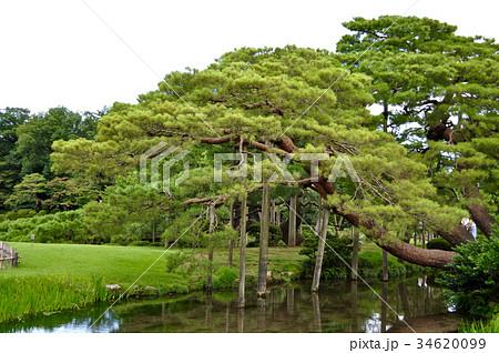 石川県金沢市兼六園の写真 34620099
