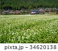 蕎麦の花と美山かやぶきの里 34620138