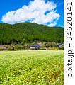 蕎麦の花と美山かやぶきの里 34620141