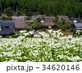 蕎麦の花と美山かやぶきの里 34620146