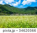 蕎麦の花と美山かやぶきの里 34620366