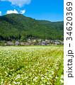 蕎麦の花と美山かやぶきの里 34620369