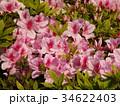 美しいツツジの花 34622403
