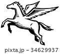 天馬 34629937