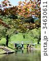 紅葉 植物 初秋の写真 34630611