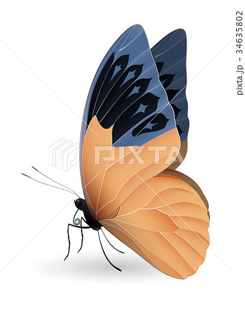 Great orange tip butterfly isolated on a white 34635802