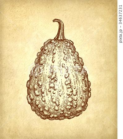 Ink sketch of gourd 34637231