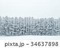 冬 森林 雪の写真 34637898