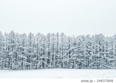 雪の森林、冬の風景。 34637898