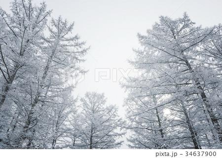 雪の森林、冬の風景。 34637900