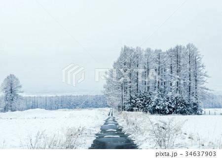 雪の森林、冬の風景。 34637903