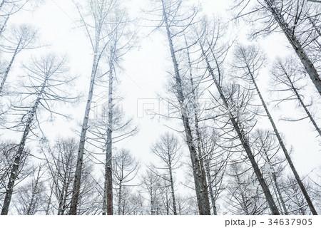 雪の森林、冬の風景。 34637905