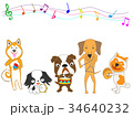 犬のコンサート 34640232