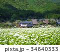 蕎麦の花と美山かやぶきの里 34640333