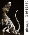 ティラノサウルス 34645850