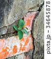 壁 かべ 緑色の写真 34645878