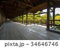 通天橋 東福寺 紅葉の写真 34646746