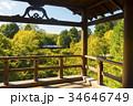通天橋 東福寺 紅葉の写真 34646749