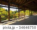 通天橋 東福寺 紅葉の写真 34646750