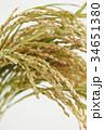稲穂 稲 穀物の写真 34651380