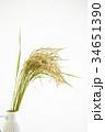 稲穂 稲 穀物の写真 34651390
