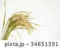 稲穂 稲 穀物の写真 34651391