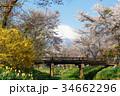 忍野村 春 富士山の写真 34662296