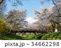 忍野村 春 富士山の写真 34662298