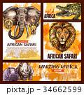 動物 アフリカ産 アフリカ大陸のイラスト 34662599