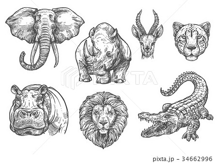 Vector sketch zoo wild African animals icons 34662996