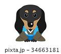 犬 ベクター 年賀状素材のイラスト 34663181