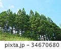 杉林 木 樹木の写真 34670680