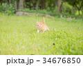 子猫 34676850
