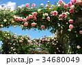 薔薇 バラ 花の写真 34680049
