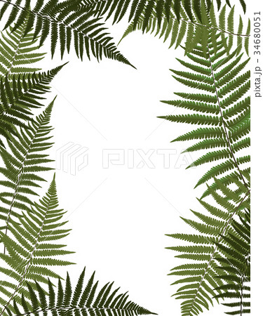 Fern Leaf Vector Background Illustration 34680051
