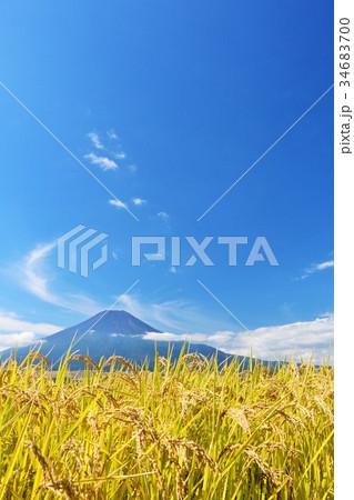 秋の青空 富士山と田んぼの稲 34683700