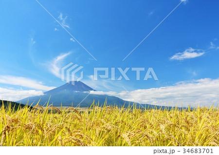 秋の青空 富士山と田んぼの稲 34683701