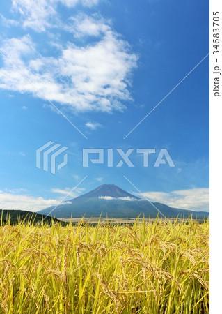 富士山と秋の田んぼ 34683705