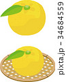 笊 果物 ゆずのイラスト 34684559