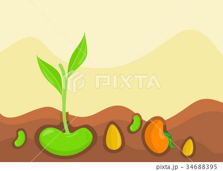 Plants Growing under Ground Vector Illustration 34688395