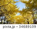 銀杏並木 34689109