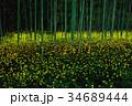 ヒメボタル 竹林 光るの写真 34689444