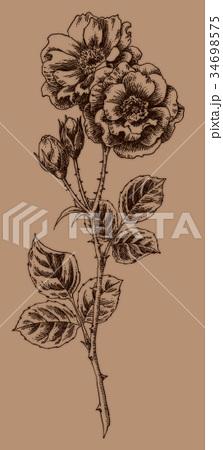 ボールペンで描いたバラの花 34698575