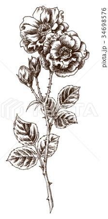 ボールペンで描いたバラの花 34698576
